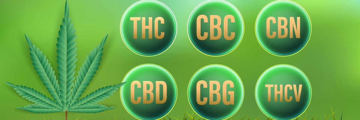 Cannabinoider - en översikt: CBD, THC, CBC, CBN, CBG, THCV